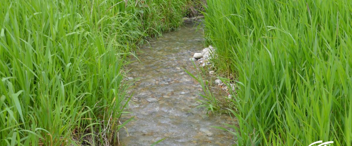 Ruisseau des Sources